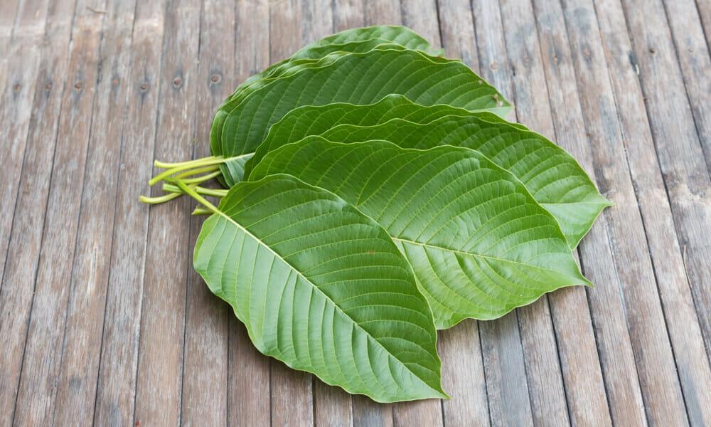 Kratom leaves on a table